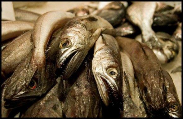 pescados-660x430